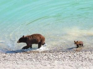 Bears-1-300x225