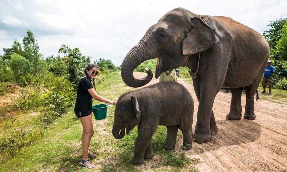 camp-elephant